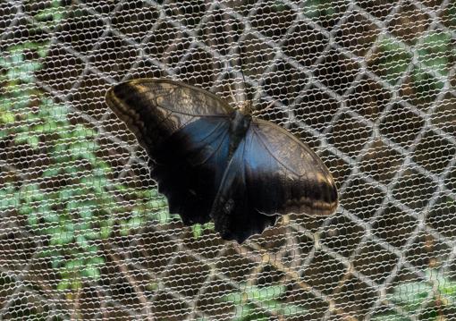 butterflies-9
