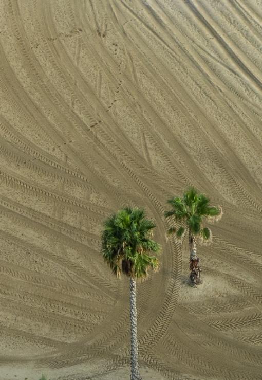 palmtrees-1