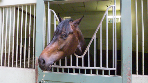 horses-17