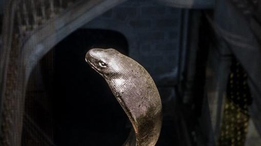 snake-1
