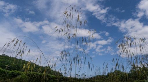 weeds-1