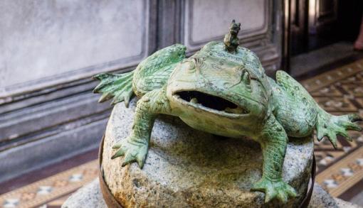 toad-1.jpg